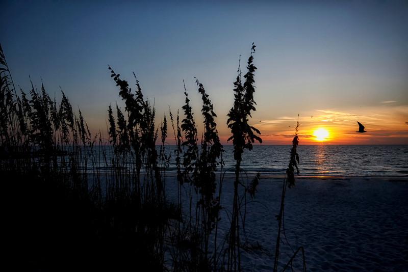 Sun set with sea oats taken near Longboat Key, FL by nature photographer Jerry Dalrymple