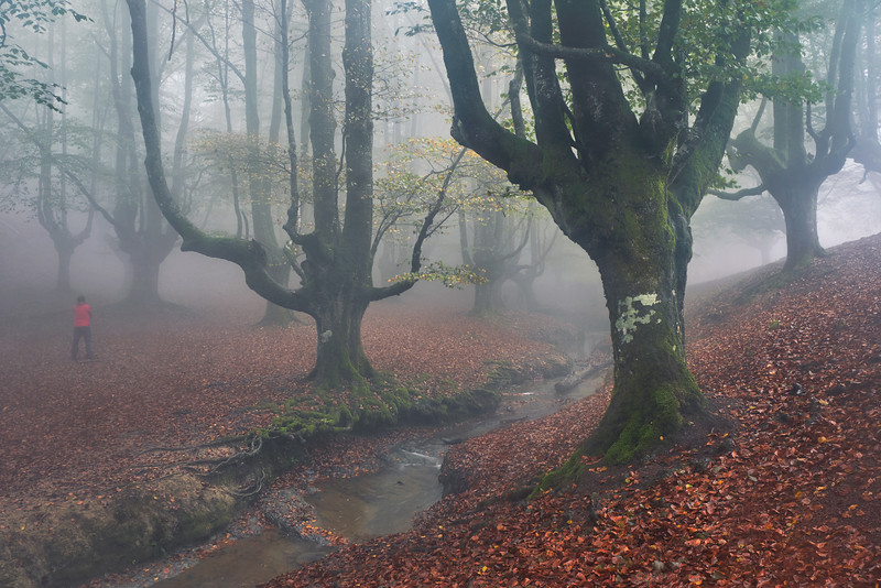 Magic forests from Bizkaia