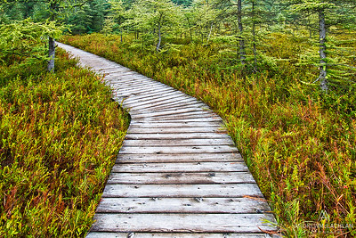 Sifton Bog, London, Ontario, Canada