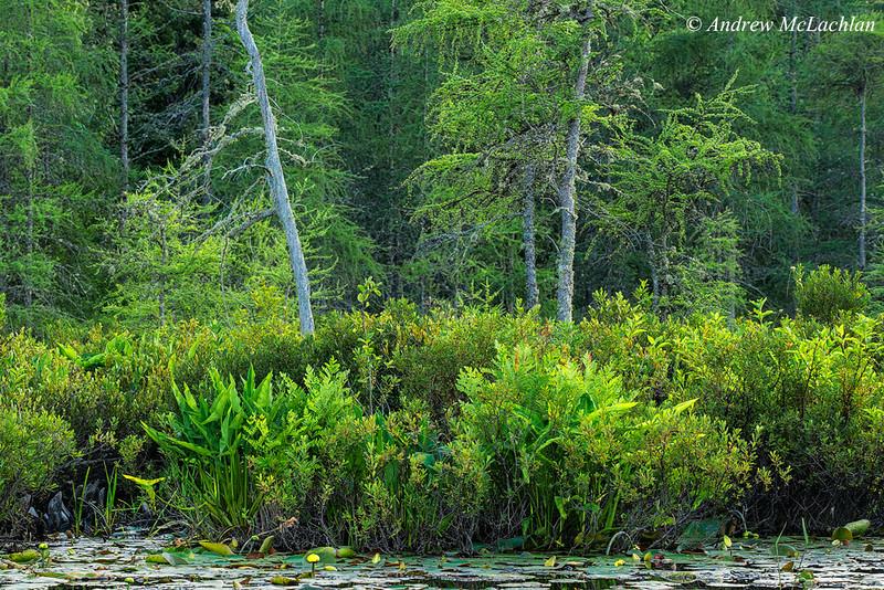 Wetland on Horseshoe Lake