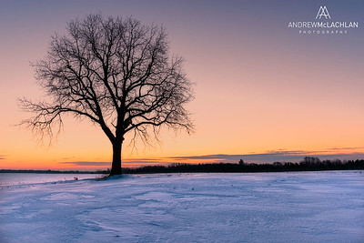 Winter Tree at Sunrise, Innisfil, Ontario, Canada