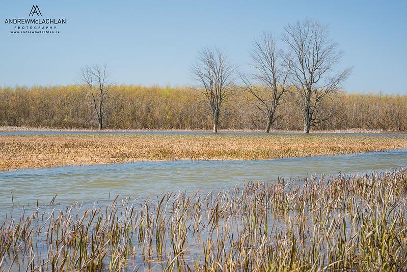 Minesing Wetlands, Angus, Ontario, Canada