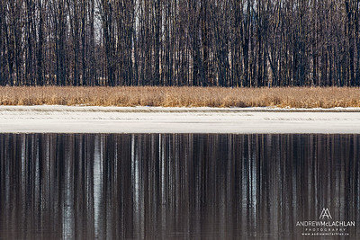 Early Spring at Tiny Marsh Provincial Wildlife Area, Elmvale, Ontario, Canada