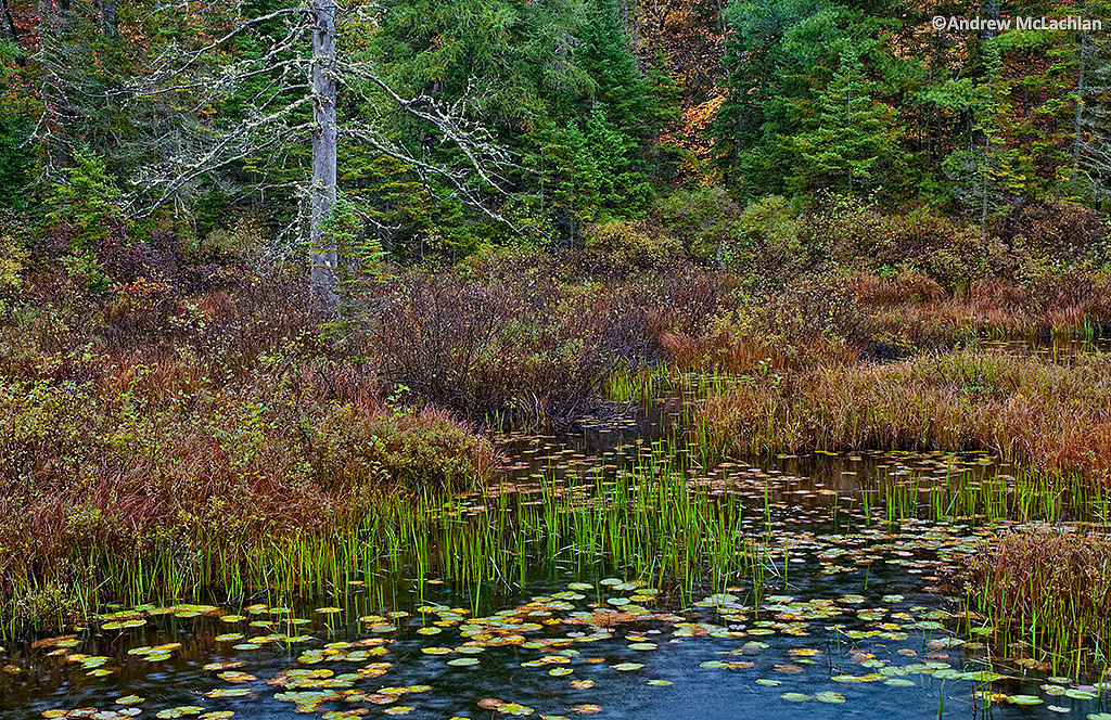 Wetland in Algonquin Provincial Park, Ontario