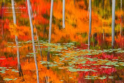 Autumn Reflections, Muskoka, Ontario, Canada