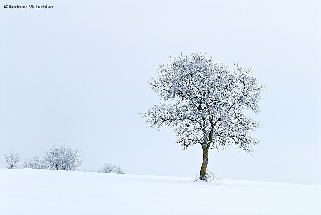 Hoarfrost on Tree in Winter, Thornton, Ontario