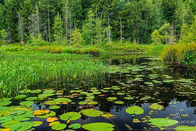 Wetland on Horseshoe lake, Parry Sound, Ontario, Canada