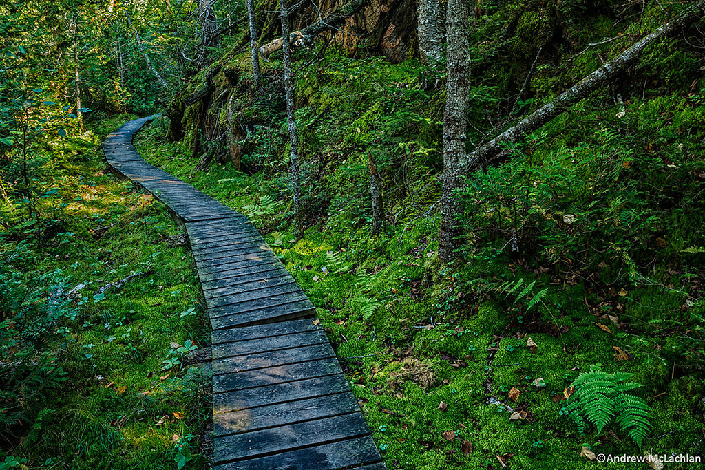 Boardwalk on the Orphan Lake Trail in Lake Superior Provincial Park, Ontario