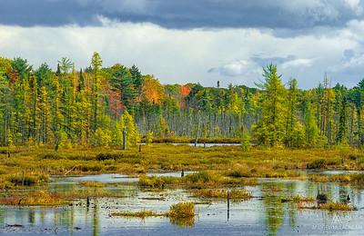 Wetland, Muskoka, Ontario, Canada