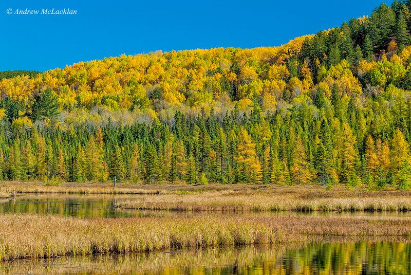 Autumn Colour at Costello Creek in Algonquin Provincial Park