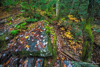 Autumn Woodland Scene in Muskoka, Ontario, Canada