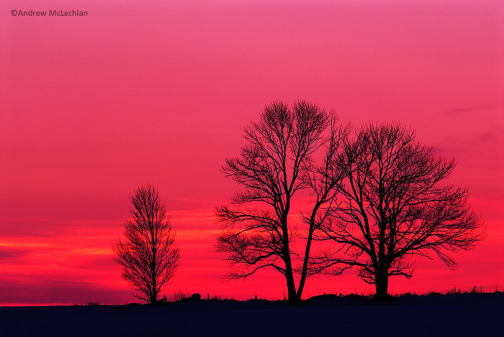 Silhouette of Winter Trees at Sunset, Bradford, Ontario