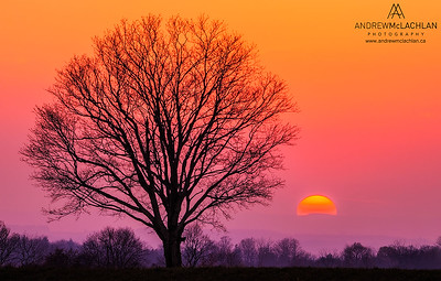 Sunset and Winter Tree, Thornton, Ontario, Canada