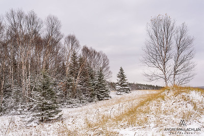 Winter Trees, Wawa, Ontario, Canada