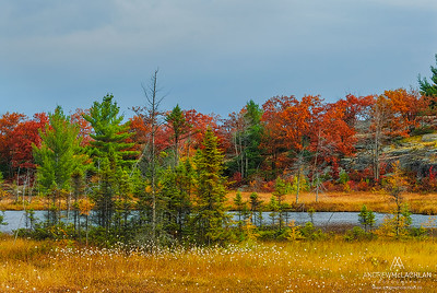 Highland Pond in the Torrance Barrens, Muskoka, Ontario, Canada