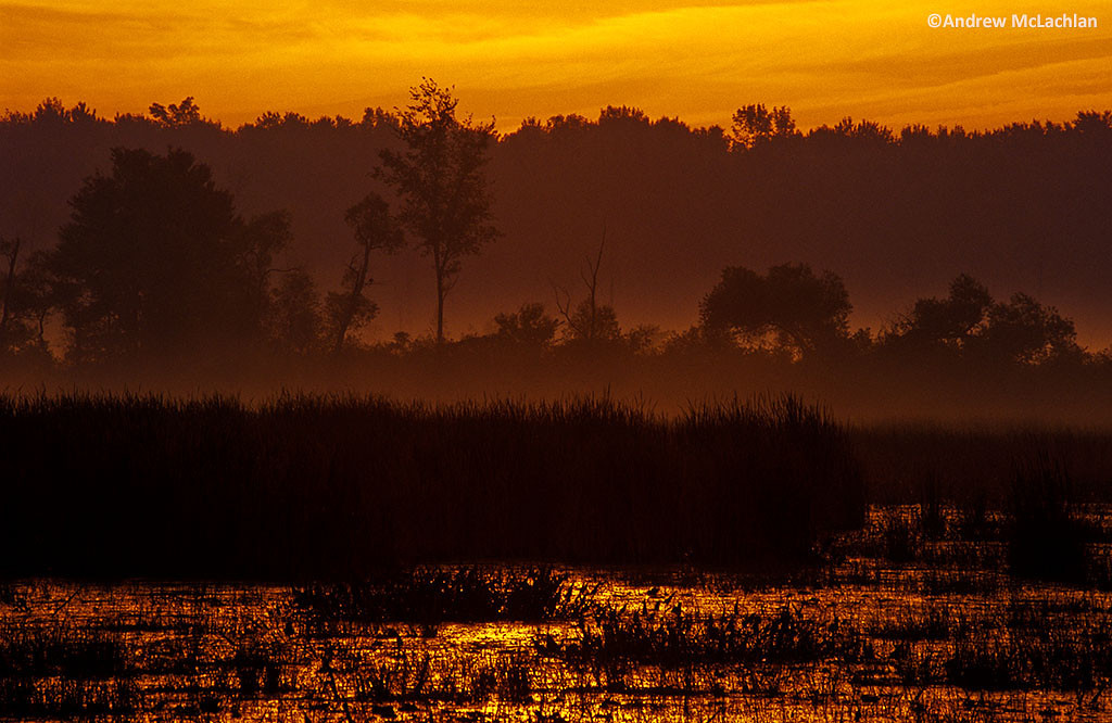 Sunrise at Tiny marsh in Tiny Marsh Provincial Wildlife Area, Elmvale, Ontario