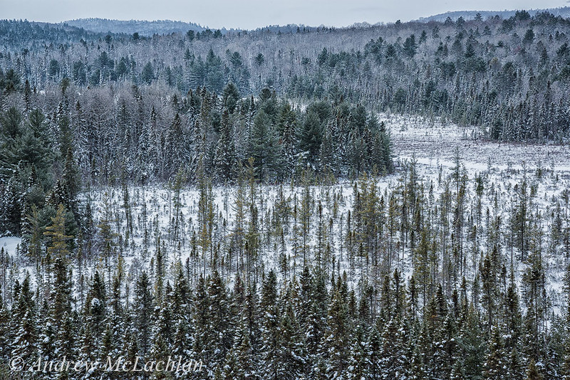 Algonquin Provincial Park in Winter