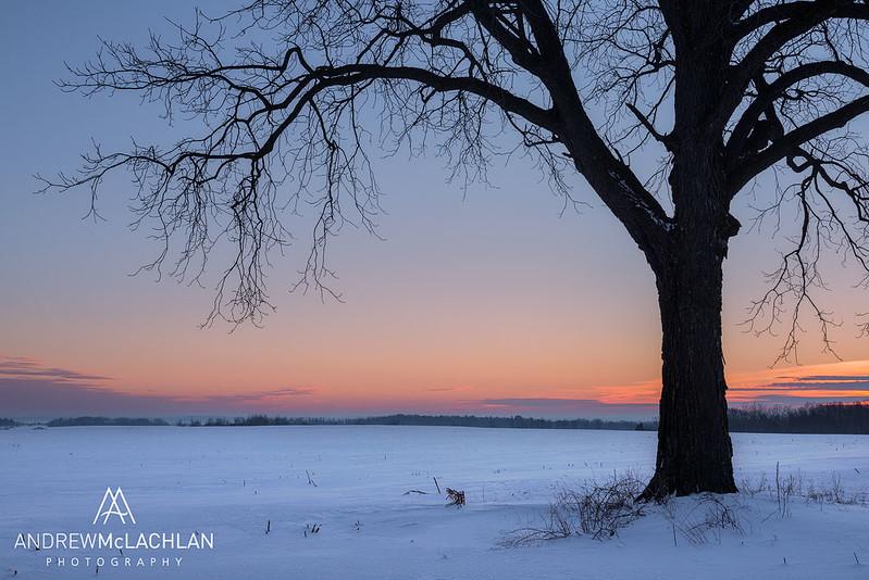 Winter Tree at Sunrise, Innisfil, Ontario, Canada