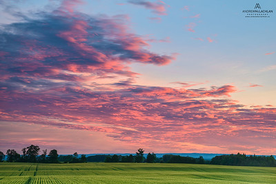 Sunset and Winter Wheat Crop, Thornton, Ontario, Canada