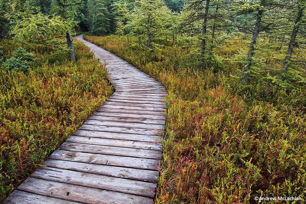 Boardwalk at Sifton Bog, London, Ontario