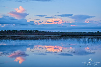 Tiny Marsh Provincial Wildlife Area, Elmvale, Ontario, Canada