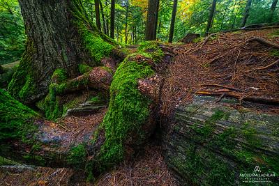 Forest Details, Muskoka, Ontario, Canada