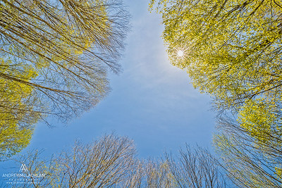 Spring Forest, Muskoka, Ontario, Canada