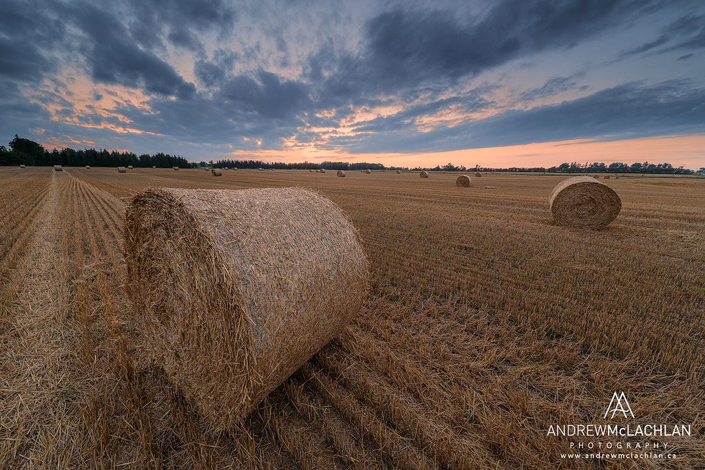 hay bales at sunset, Thornton, Ontario, Canada