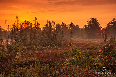 Sunrise at the Torrance Barrens, Muskoka, Ontario, Canada