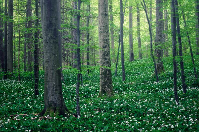 Breathing woodland