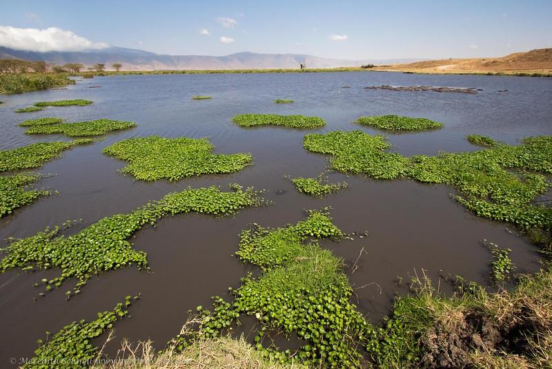Lake in the Ngorongoro Crater