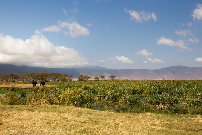 In the Ngorongoro Crater