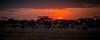 Sunset in Tarangire National Park