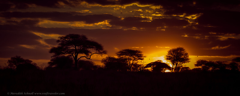 Sunset at Tarangire National Park