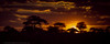 Sunset at Tarangire National Park