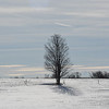 Tree on a Cold Winter's day