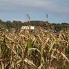 Cornfield and a Barn