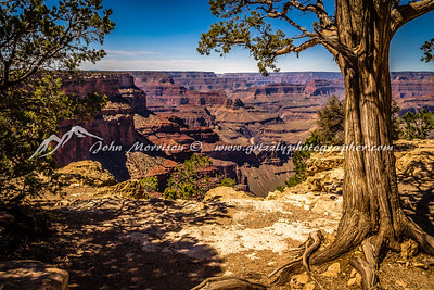 Grand Canyon Tree