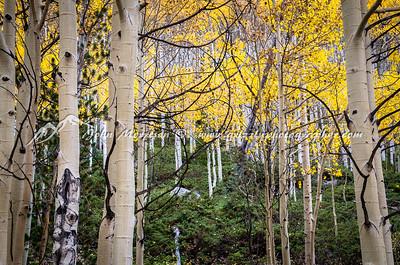 Colorado fall color as Aspens change