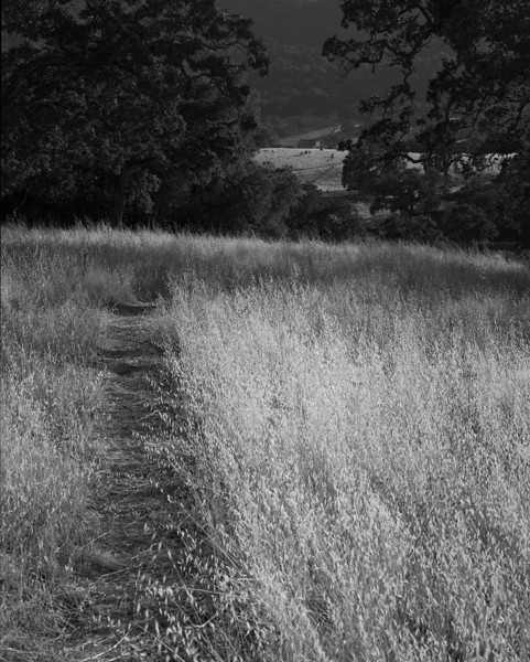 Path to the Meadow, Halls Valley, Film