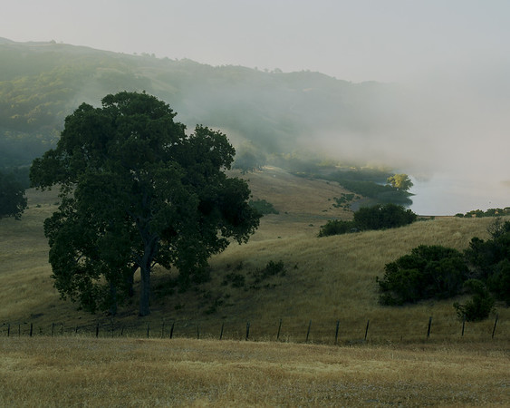 Foggy Morning in Halls Valley, Film