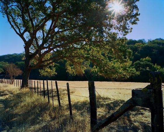 San  Felipe Oaks Late Morning