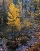 Yosemite Late Fall