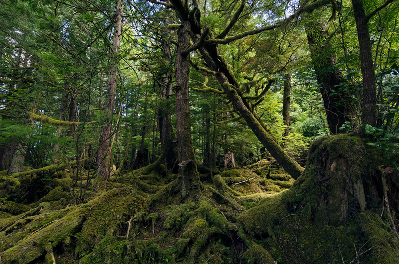 BCrainforest.jpg