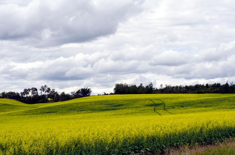farmerfield.jpg