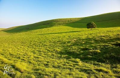Rolling Green Grass Hills