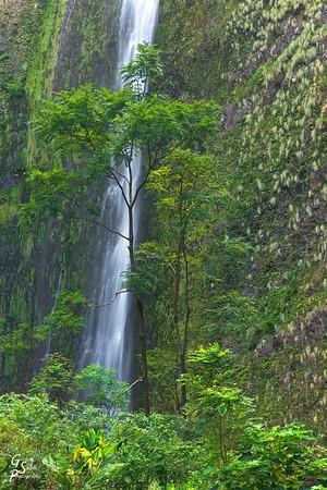 Hi'ilawe Waterfall and Towering Trees