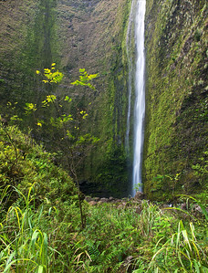 Waipio Valley and Waterfall Palm trees and lush greenery everywhere amidst the backdrop of Hi'ilawe Waterfall