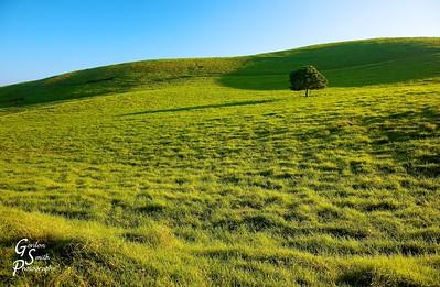 Lone Tree Green Pasture