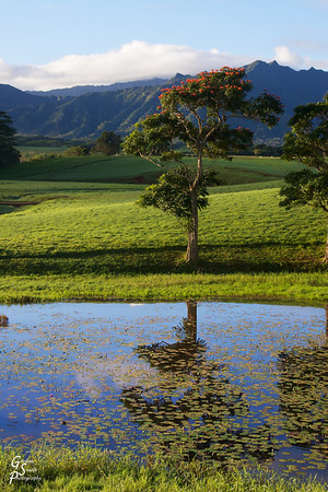 Tropical pastures
